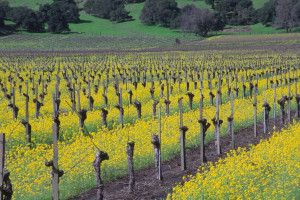 Visiting Bay Area Wineries: Tour Guide Tips
